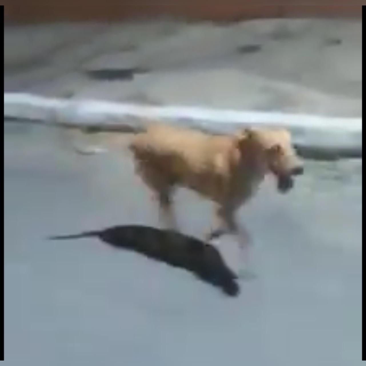 Resultado de imagem para Cachorra corre atrás da ambulância do Samu por quase 3 km para ficar ao lado do dono na PB; veja vídeo